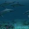涼しげなイルカに癒やされる夏にピッタリの動く壁紙アプリ「Dolphins 3D」期間限定で無料化