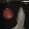 【BBC】世界最大真空施設でボールと羽毛を同時に落下させたらどうなるか?その謎が明らかに