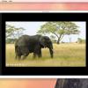 大量画像のサイズとフォーマットを一気に変換することができるアプリ「QuickScale」が70%オフ!本日のMacアプリセールまとめ