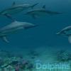 かわいいイルカに癒やされる涼しげなスクリーンセーバー「Dolphins 3D」が無料化した本日のMacアプリセールまとめ