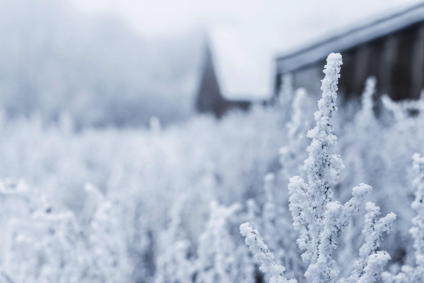 来 たる 冬