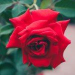 【3/23まで】Kindleストアで園芸好き必見!全点200円の「生け花から園芸まで 植物関連本フェア」が開催中