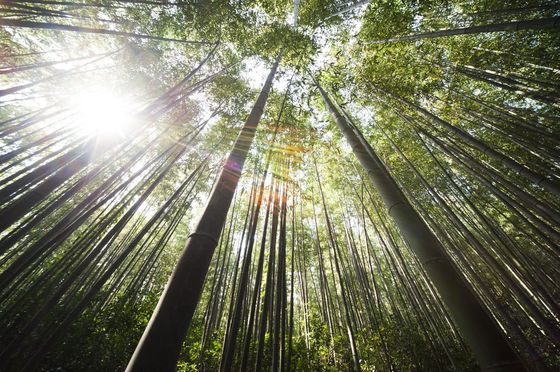 Bamboo damyang sunshine 54601
