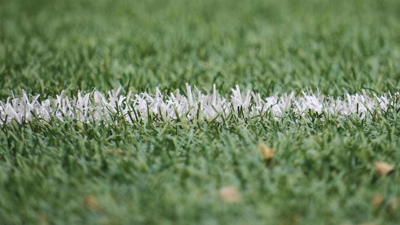 Grass grassland 54567