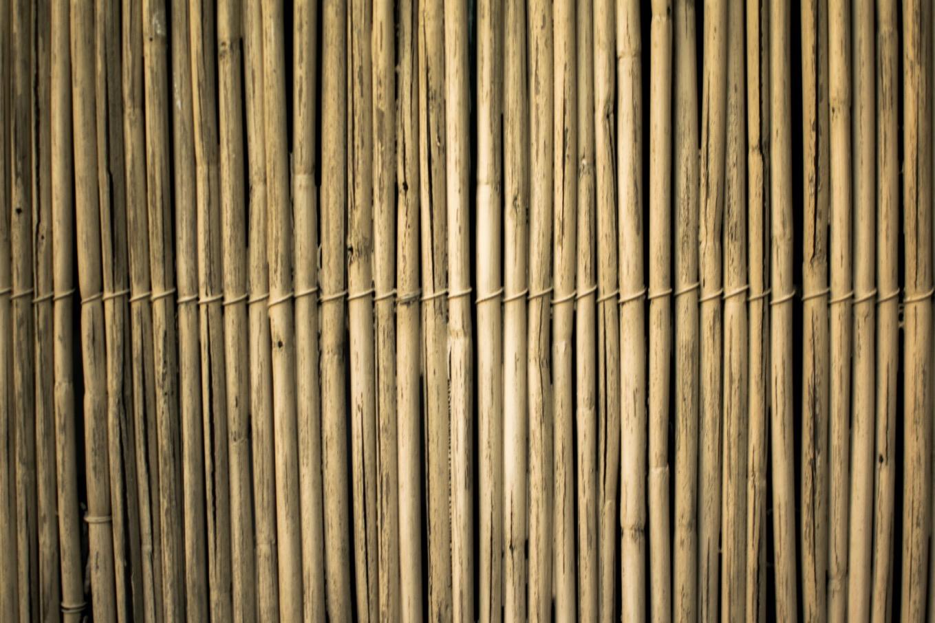 Brown bamboos 2463358
